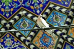 g-Isfahan-Iran-by-Stevie-Roushani-(23)